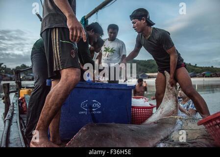 Fishermen with a manta ray, San Hlan beach, Burma. - Stock Image