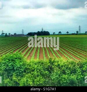 Plies and cropped field - Stock Image