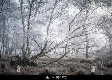 Hoar frost at Frensham Common in Surrey, UK. Heathland landscape scene with frosty trees. - Stock Image