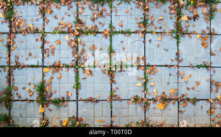 Ground sidewalk tiles with fallen autumn leaves - Stock Image