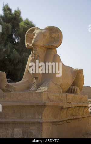 Ram Sphinx at the Entrance to the Temple of Karnak, Luxor, Egypt - Stock Image