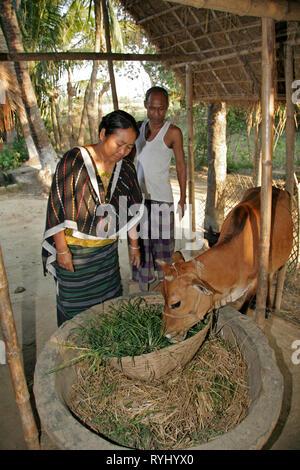 BANGLADESH Man and woman of the Garo tribal minority feeeding their cow, Haluaghat, Mymensingh region photo by Sean Sprague - Stock Image
