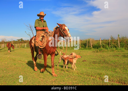 Cuba Pinar del Rio Cuban cowboy on horseback leads two dogs on a rope at dusk Photo CUBA1432 Copyright Christopher - Stock Image