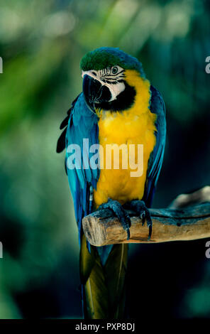 colorful parrot at  local zoo on the Canary island of Tenerife - Stock Image