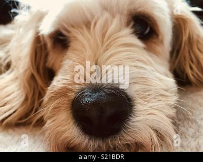 Dogs Life - Stock Image