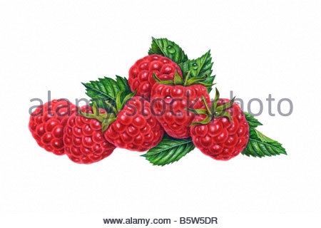 Raspberry Red Group - Stock Image