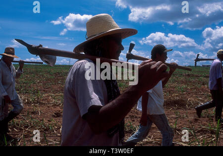 Rural workers at sugarcane plantation, Brazilian ethanol production. Mato Grosso do Sul State, Mid-west Brazil. - Stock Image