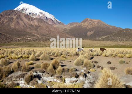 Sajama National Park in Bolivia - Stock Image