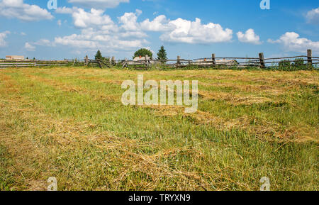 russian field with mown hay in siberia on a clear summer day in august - Stock Image