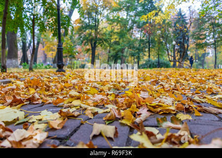 autumn landscape in a city park yellow leaves on a background of green trees - Stock Image