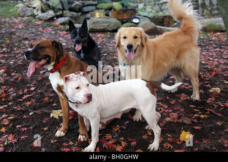 Quartet of dogs in a leafy yard - Stock Image