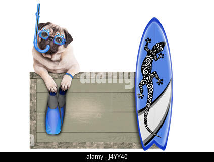 funny pug dog with blue vintage wooden beach sign, with goggles, snorkel, surfboard and flippers for summer, isolated - Stock Image