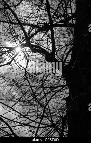 bare branches - Stock Image