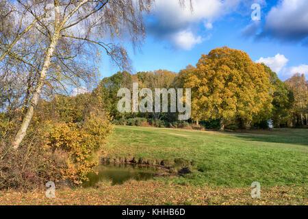 Chorleywood Common in the Autumn, Hertfordshire, England, UK - Stock Image