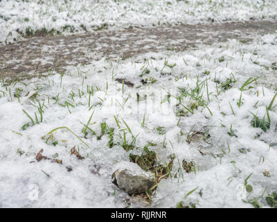 Thawing melting snow on grass in 2019. - Stock Image