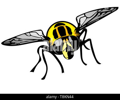 Isolated colour Illustration of Footballer hoverfly head-on on white background. - Stock Image