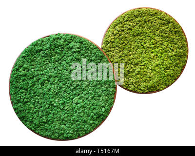 Two different examples of Finland mosses types in overlaying round trays viewed from above, isolated on white background - Stock Image