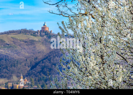 blackthorn tree background bologna in spring - San Luca  Colli Bolognesi area - Italy - Stock Image