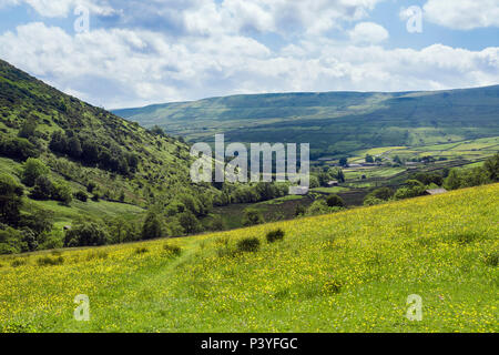 Wildflower field Buttercups & Daisies in countryside in summer above Thwaite Upper Swaledale Yorkshire Dales National Park North Yorkshire England UK - Stock Image