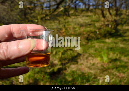 A wee dram of Scotch whisky in the open air on Islay in Scotland. Bowmore whisky tasting in a woodland beside this - Stock Image