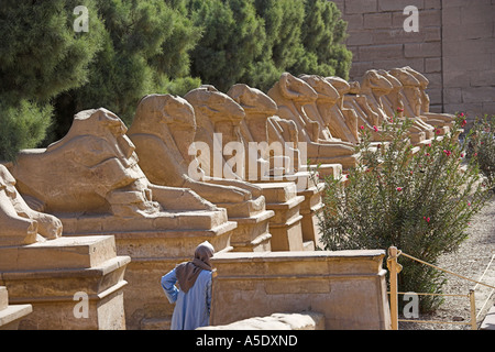 Avenue of Ram Sphinxes at the Entrance to the Temple of Karnak, Luxor, Egypt - Stock Image