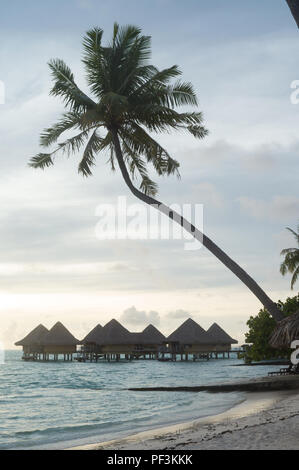 Palm tree with bungalows on stilts at the Le Moana Intercontinental resort in Bora Bora, French Polynesia. - Stock Image