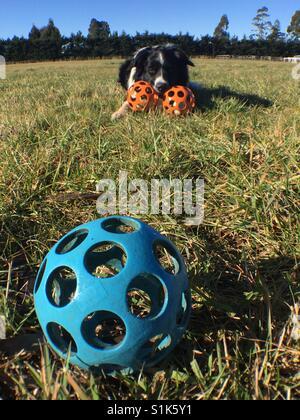 Dog and balls - Stock Image