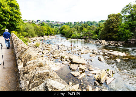 Richmond Yorkshire UK, families playing in River Swale Richmond Yorkshire, playing in river, River Swale Richmond, river, river Swale Yorkshire - Stock Image