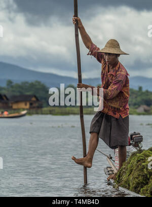 An local Intha dredges Inle Lake on his paddle boatr for tomato farming, Shan hills, Myanmar. - Stock Image