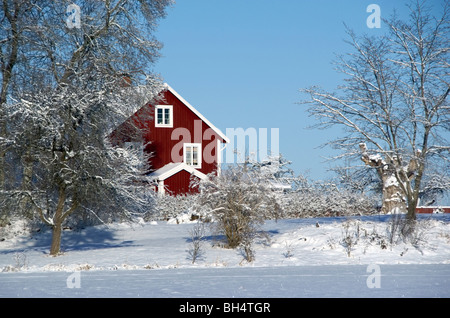 Red house with snow covered trees (trees not in focus) - Stock Image