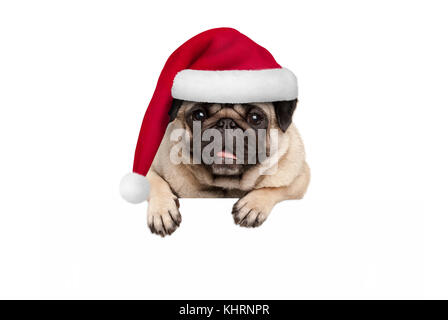 cute Christmas  pug puppy dog wearing red santa hat hanging with paws on blank white banner, isolated on white background - Stock Image