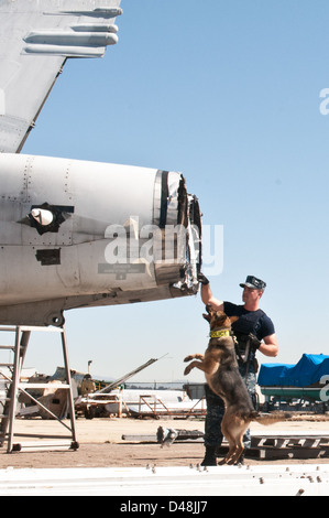 A military working dog searches for explosives during a drill. - Stock Image