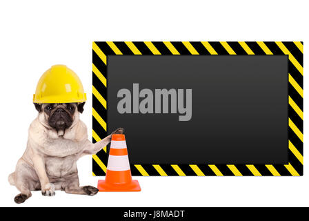 pug dog with yellow construction worker safety helmet and blank warning sign, isolated on white background - Stock Image