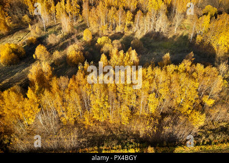 Aerial view of trees in golden autumn colors. Bitsevski Park (Bitsa Park), Moscow, Russia. - Stock Image
