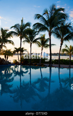 Swimming Pool Palm Trees Beach - Stock Image