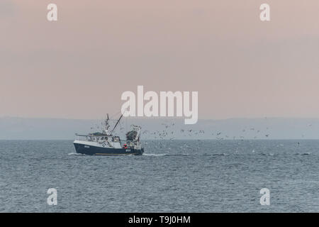 Mousehole, Cornwall, UK. 19th May 2019. UK Weather.  A fishing boat returning to Newlyn with his catch and a following of gulls. on a mild but dull morning. Credit Simon Maycock / Alamy Live News. - Stock Image