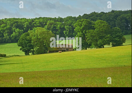 Field barn surrounded by trees on the Cotswold escarpment near to the remote village of Cutsdean. - Stock Image