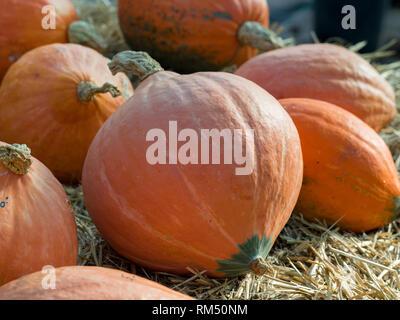 Orange pumpkin group - Stock Image