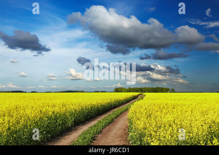 Landscape with blossoming field and road - Stock Image