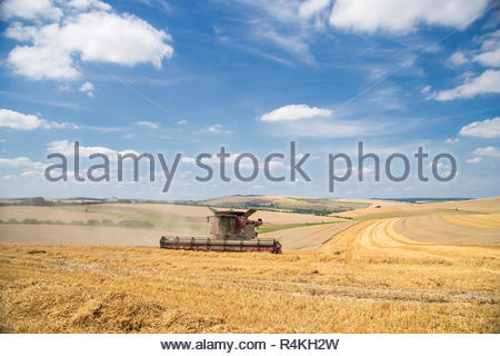 Harvest view of combine harvester cutting summer wheat field crop and blue sky on farm - Stock Image