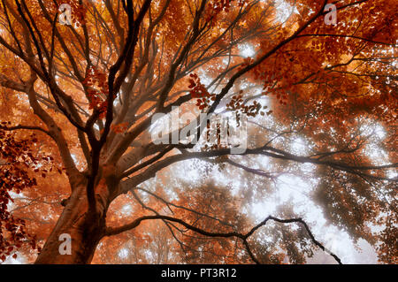 misty atmosphere in the woods with trees and autumn colors - Stock Image