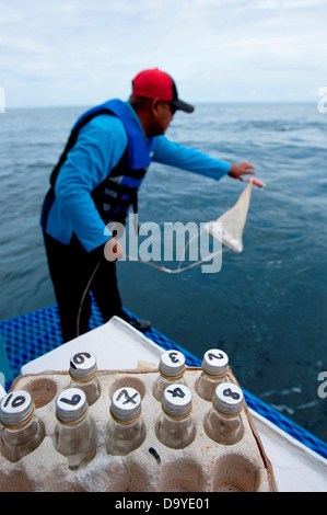 Fisheries officer collecting samples for water quality testing, Brunei - Stock Image