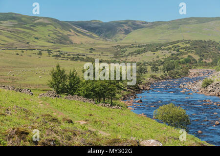 The Pennine Way long distance footpath in Upper Teesdale, alongside the river Tees, looking towards Cronkley Fell, in summer sunshine - Stock Image
