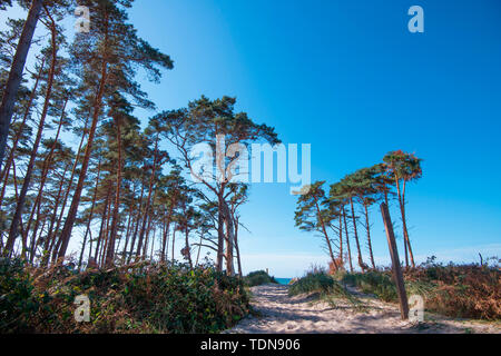 hiking trail at western beach, Western Pomerania Lagoon Area National Park, Fischland-Darss-Zingst, Mecklenburg-Western Pomerania, Germany, Europe - Stock Image
