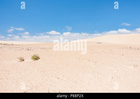 Corralejo dunes natural park, dunes on the island of Fuerteventura, canary islands - Stock Image