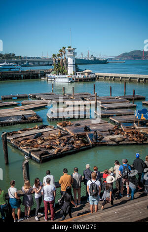 Sea Lions on Pier 39 in San Francisco. - Stock Image