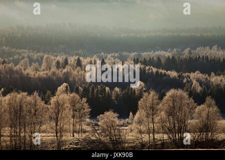 Frost covered forests and meadows under a cloudy sky in Anundsjoe, Sweden. - Stock Image
