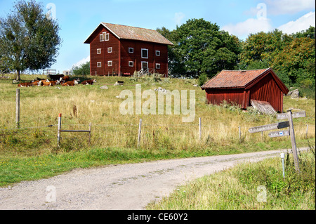 Sweden in the summer. Rural countryside road with red houses and cows. - Stock Image