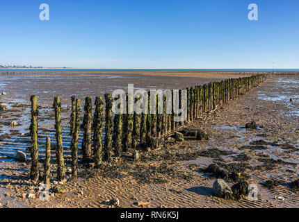 Polder scheme constructed on the mudflats using brushwood breakwaters. Cudmore Grove Country Park, East Mersea, Essex. - Stock Image