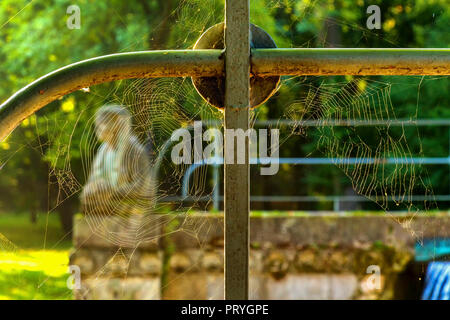Spider net - Stock Image
